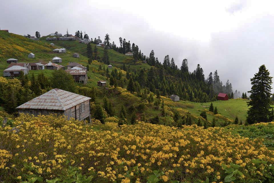 Czas żółtych azalii. Najpiękniejsze miejsce w Gruzji w najlepszym miesiącu!