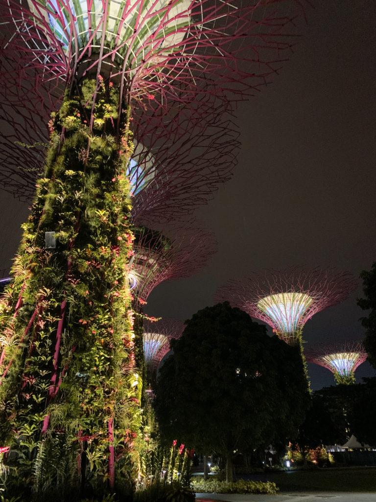 Gardens by the Bay nocą - co zobaczyć w Singapurze