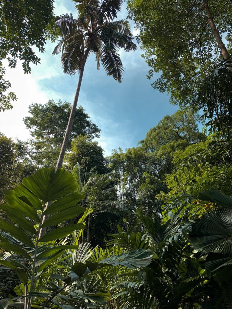 Botanic Gardens - co zobaczyć w Singapurze