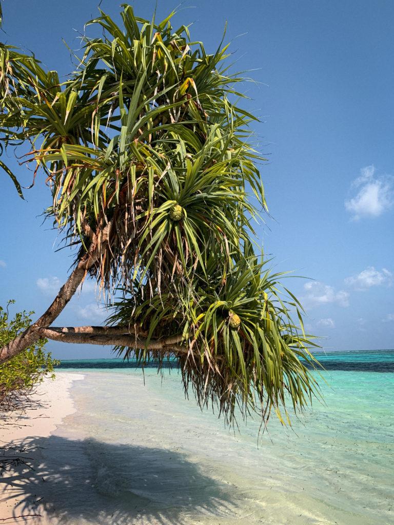 Bikini beach - co warto wiedzieć o Malediwach